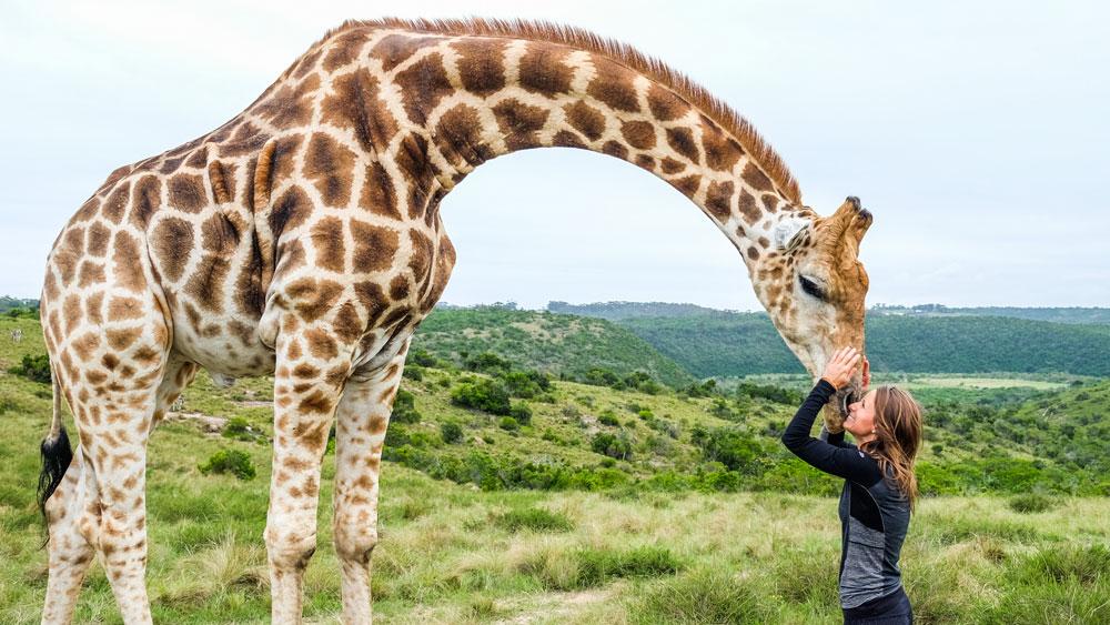 girl kissing a giraffe in south coast