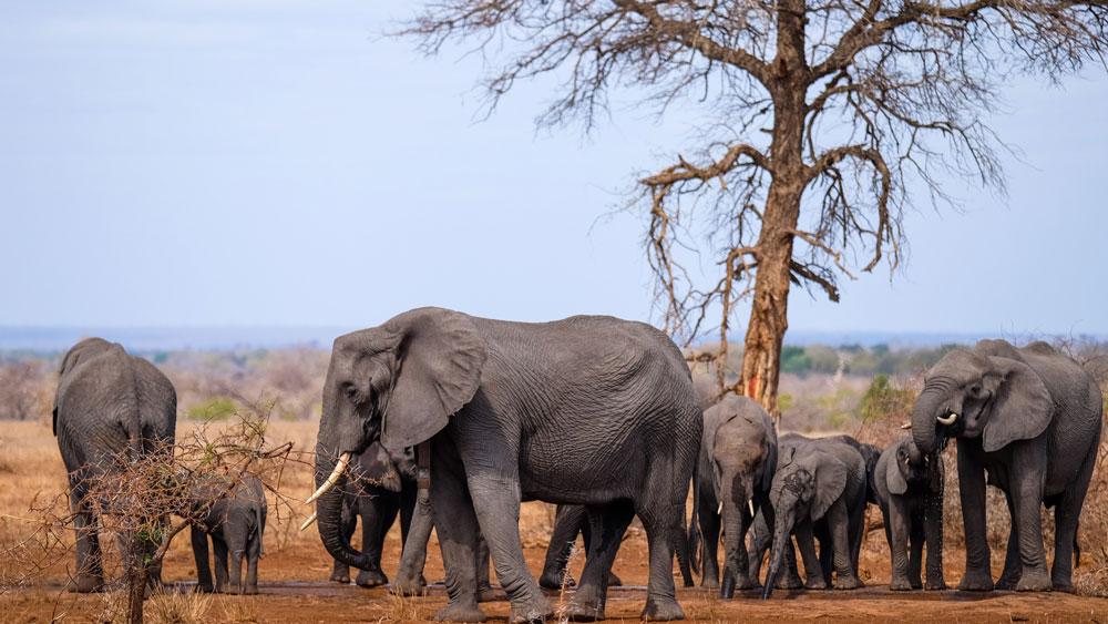 elephant family in kruger park